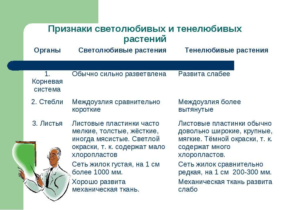Признаки светолюбивых и тенелюбивых растений Органы Светолюбивые растения Тен...