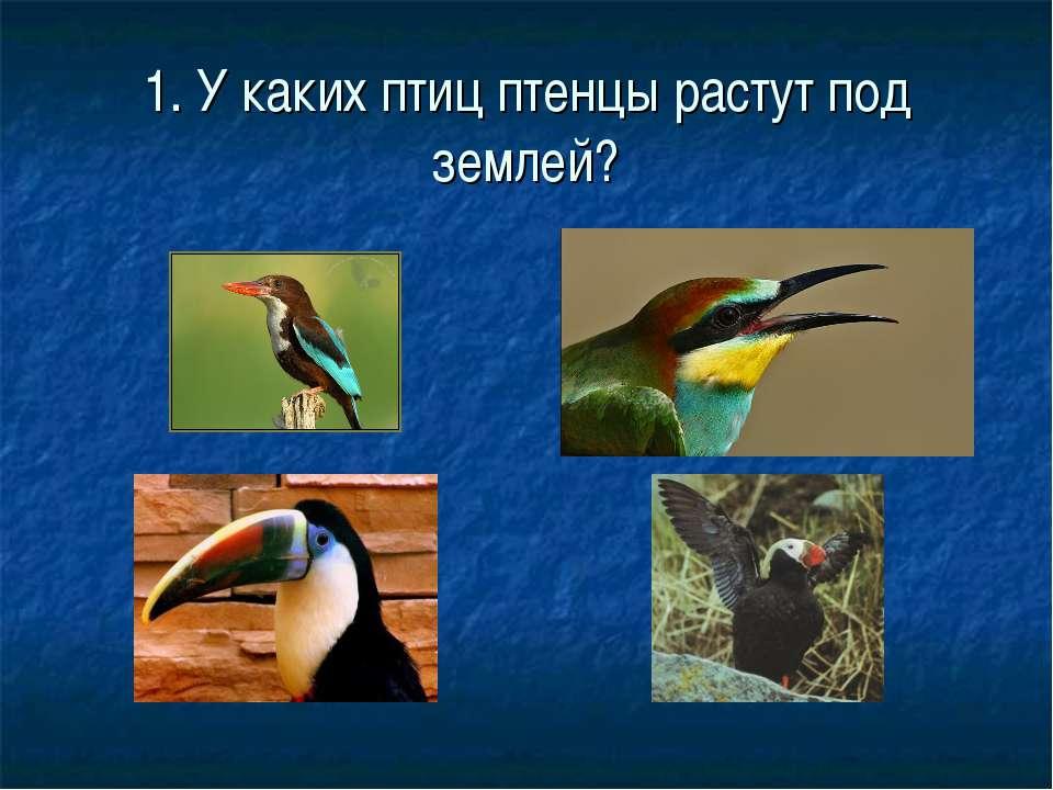 1. У каких птиц птенцы растут под землей?