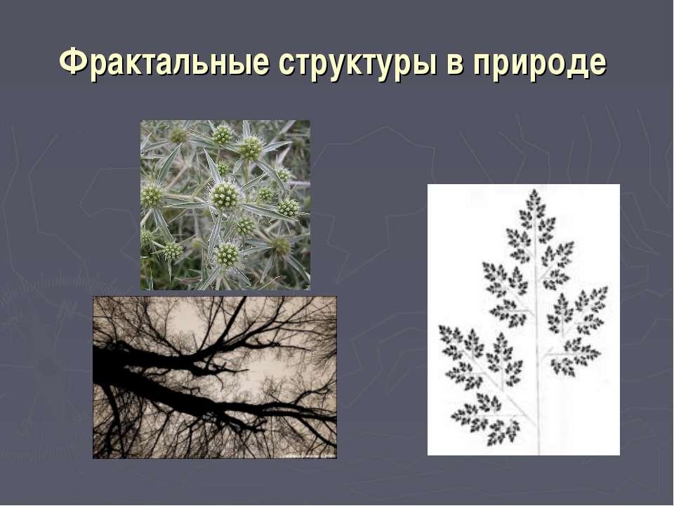 Фрактальные структуры в природе