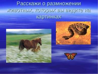 Расскажи о размножении животных, которых вы видите на картинках
