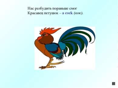 Нас разбудить пораньше смог Красавец петушок – a cock (кок).