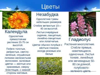 Цветы Гладиолус Растения многолетние. Стебли прямые, неветвящиеся, одиночные....