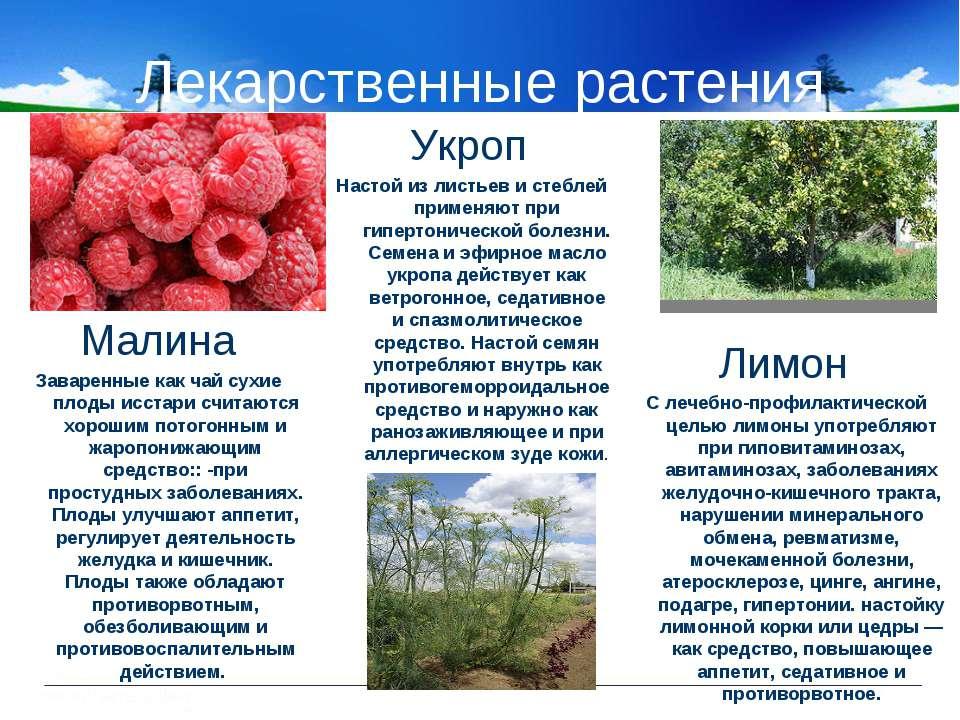 Лекарственные растения Малина Заваренные как чай сухие плоды исстари считаютс...