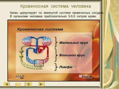 Кровеносная система человека Кровь циркулирует по замкнутой системе кровеносн...
