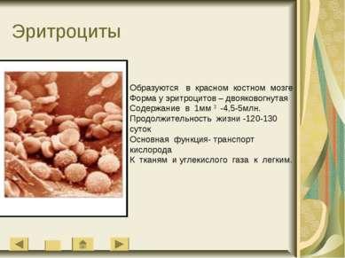 Эритроциты Образуются в красном костном мозге Форма у эритроцитов – двояковог...