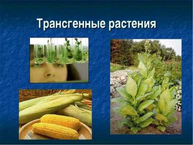 Трансгенные растения