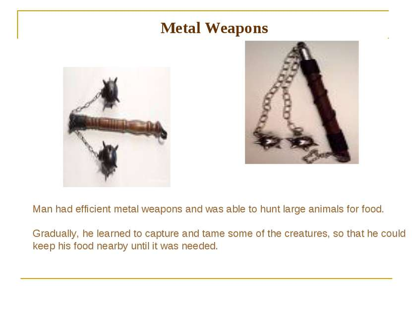 Metal Weapons Man had efficient metal weapons and was able to hunt large anim...