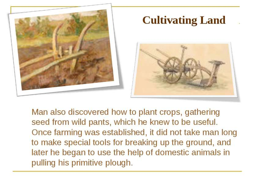 Man also discovered how to plant crops, gathering seed from wild pants, which...