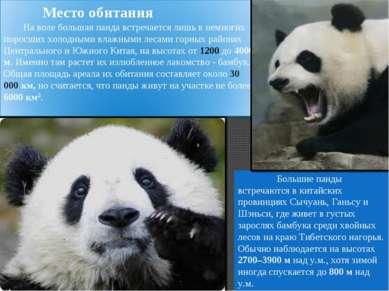 Большие панды встречаются в китайских провинциях Сычуань, Ганьсу и Шэньси, гд...