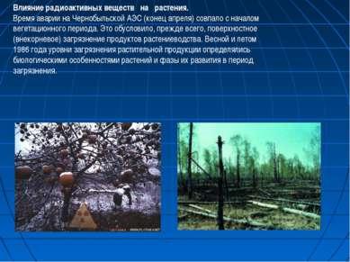 Влияние радиоактивных веществ на растения. Время аварии на Чернобыльской АЭС ...