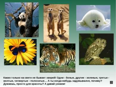 Каких только на свете не бывает зверей! Одни - белые, другие - зеленые, треть...