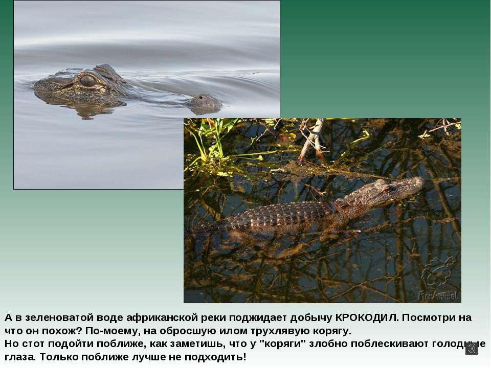 А в зеленоватой воде африканской реки поджидает добычу КРОКОДИЛ. Посмотри на ...