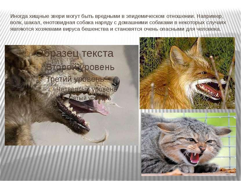 Иногда хищные звери могут быть вредными в эпидемическом отношении. Например, ...