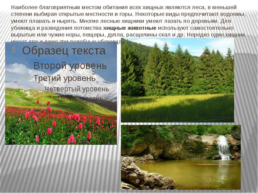 Наиболее благоприятным местом обитания всех хищных являются леса, в меньшей с...
