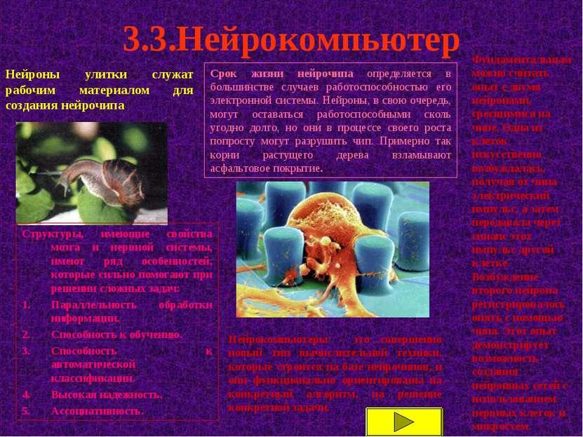 3.3.Нейрокомпьютер Нейроны улитки служат рабочим материалом для создания нейр...