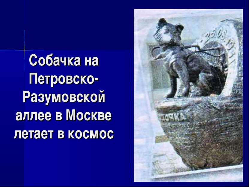Собачка на Петровско-Разумовской аллее в Москве летает в космос