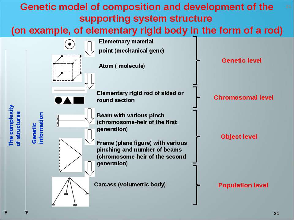 * Genetic model of composition and development of the supporting system struc...