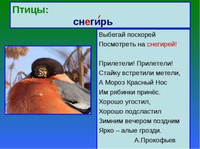 Птицы: снегирь Выбегай поскорей Посмотреть на снегирей! Прилетели! Прилетели!...