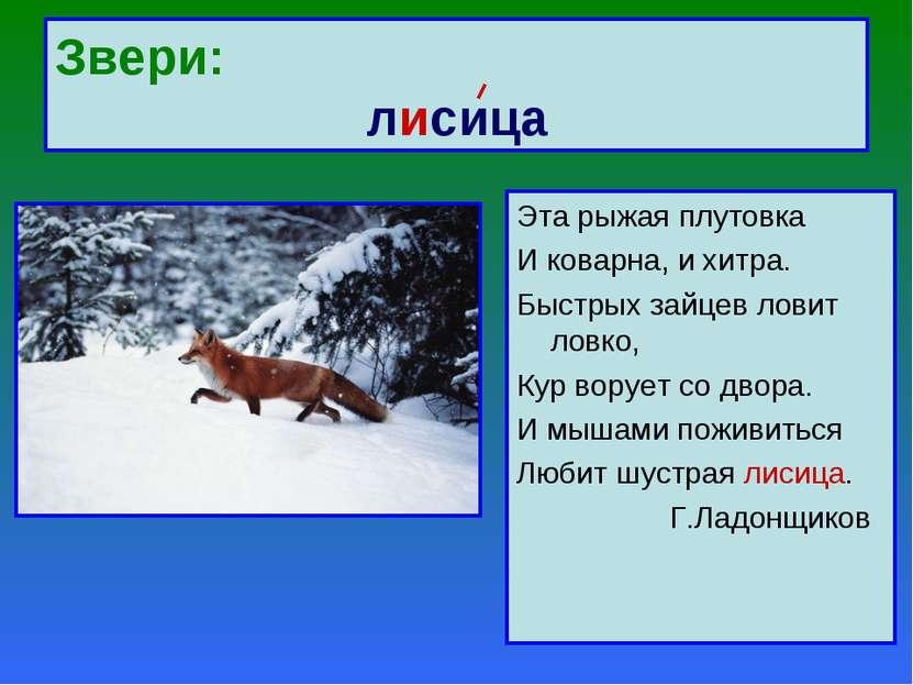 Звери: лисица Эта рыжая плутовка И коварна, и хитра. Быстрых зайцев ловит лов...