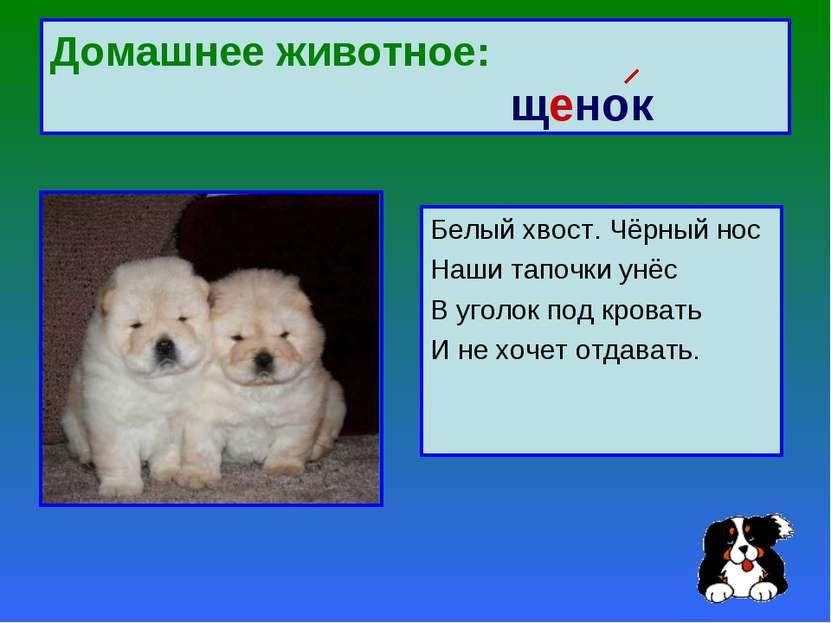 Домашнее животное: щенок Белый хвост. Чёрный нос Наши тапочки унёс В уголок п...