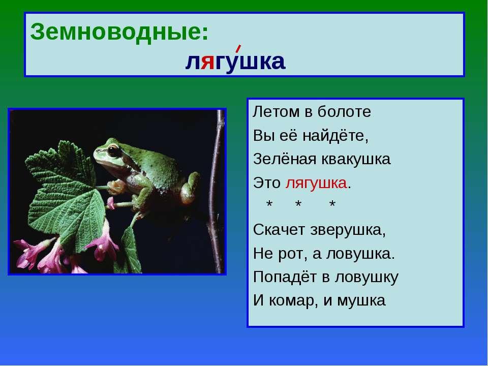 Земноводные: лягушка Летом в болоте Вы её найдёте, Зелёная квакушка Это лягуш...