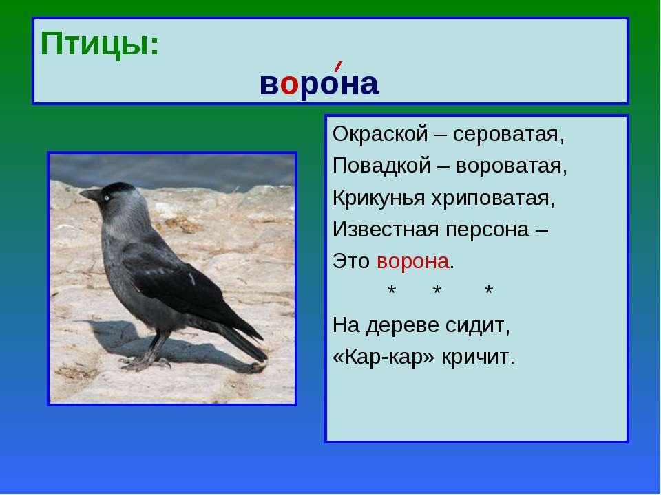 Птицы: ворона Окраской – сероватая, Повадкой – вороватая, Крикунья хриповатая...