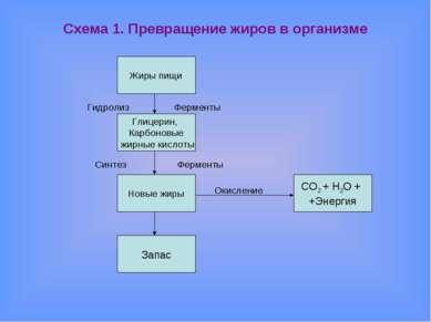 Схема 1. Превращение жиров в организме Гидролиз Ферменты Синтез Ферменты Окис...