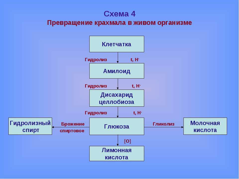 Схема 4 Превращение крахмала в живом организме Гидролиз t, H+ Гидролиз t, H+ ...