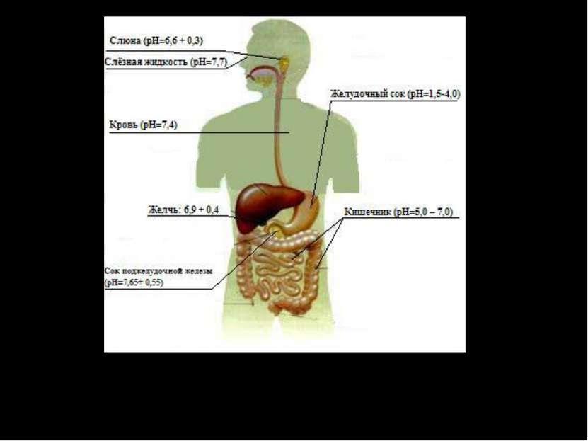 На этом рисунке показано нормальное кислотно-щелочное состояние (рН) некоторы...