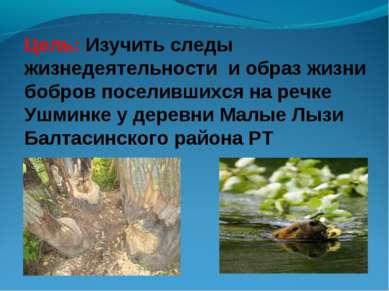 Цель: Изучить следы жизнедеятельности и образ жизни бобров поселившихся на ре...
