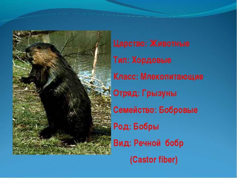 Царство: Животные Тип: Хордовые Класс: Млекопитающие Отряд: Грызуны Семейство...