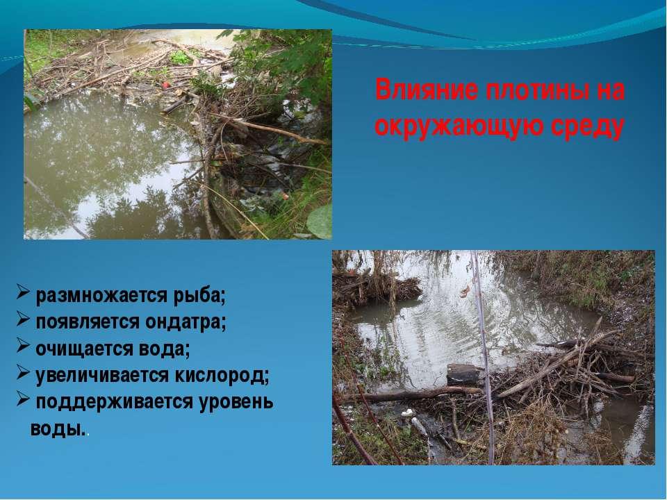 Влияние плотины на окружающую среду размножается рыба; появляется ондатра; оч...