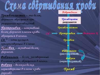 Тромбопластин Протромбин Витамин К Повреждение Тромбоциты разрушаются Са2+ Фи...