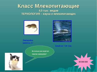 Класс Млекопитающие 4,5 тыс. видов ТЕРИОЛОГИЯ – наука о млекопитающих Землеро...