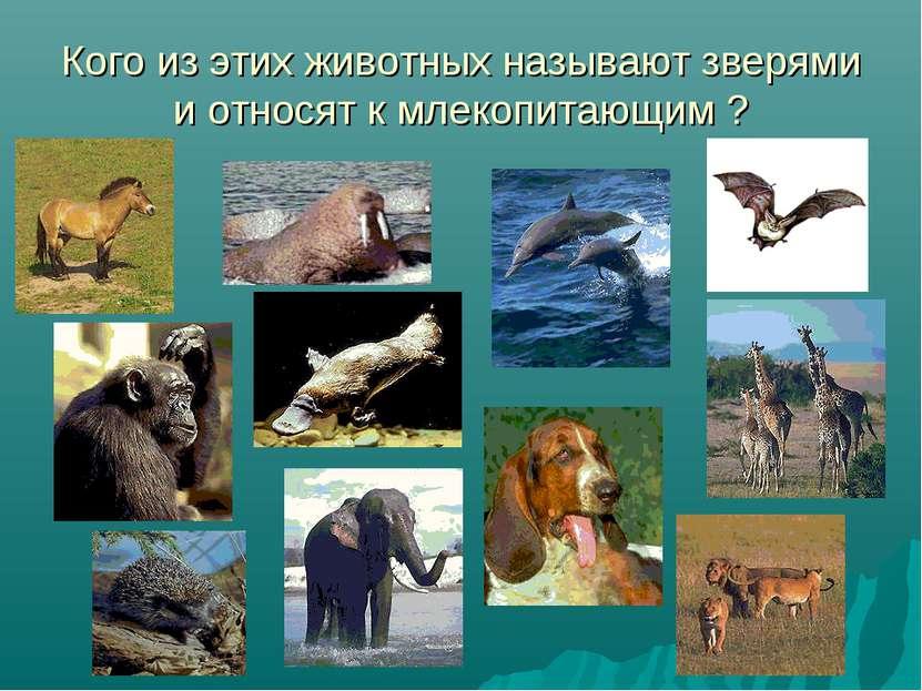 Кого из этих животных называют зверями и относят к млекопитающим ?