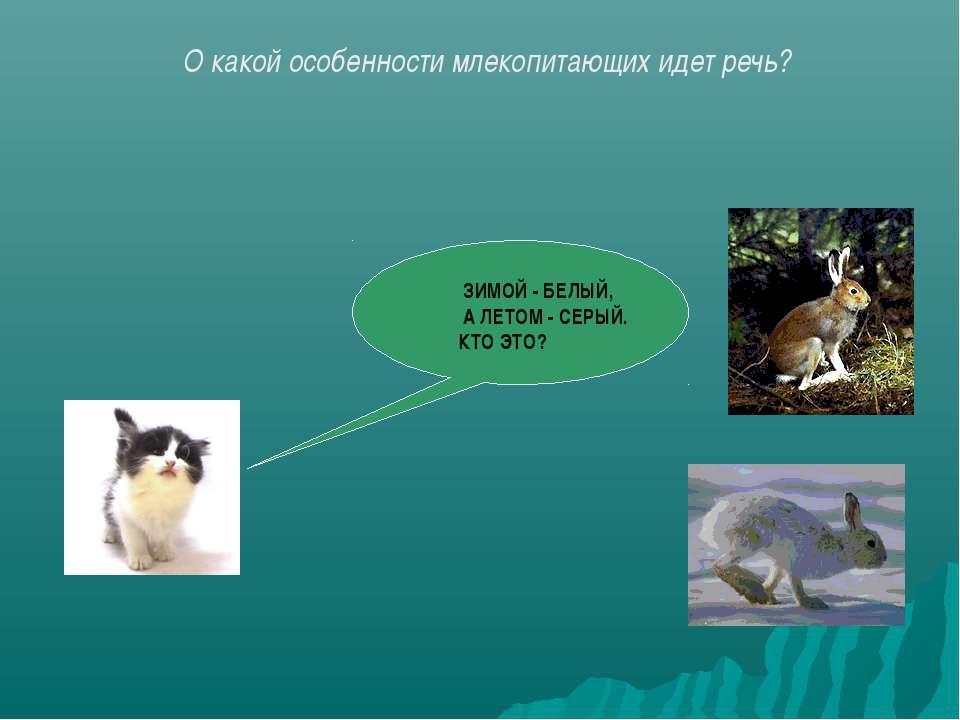 ЗИМОЙ - БЕЛЫЙ, А ЛЕТОМ - СЕРЫЙ. КТО ЭТО? О какой особенности млекопитающих ид...
