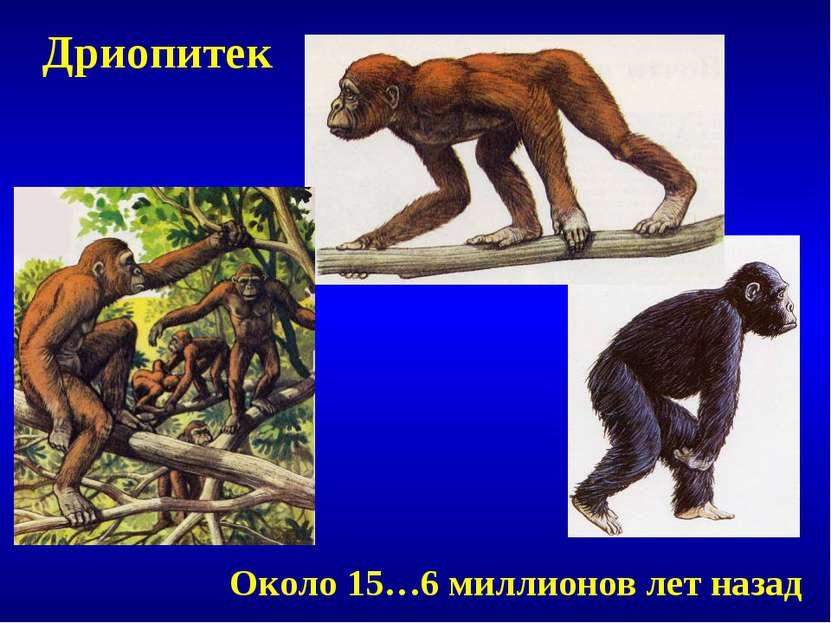 Дриопитек Около 15…6 миллионов лет назад