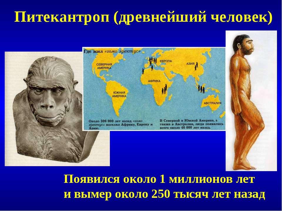 Питекантроп (древнейший человек) Появился около 1 миллионов лет и вымер около...