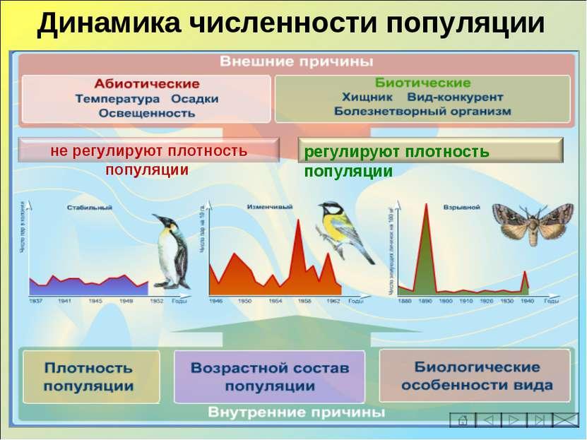Динамика численности популяции