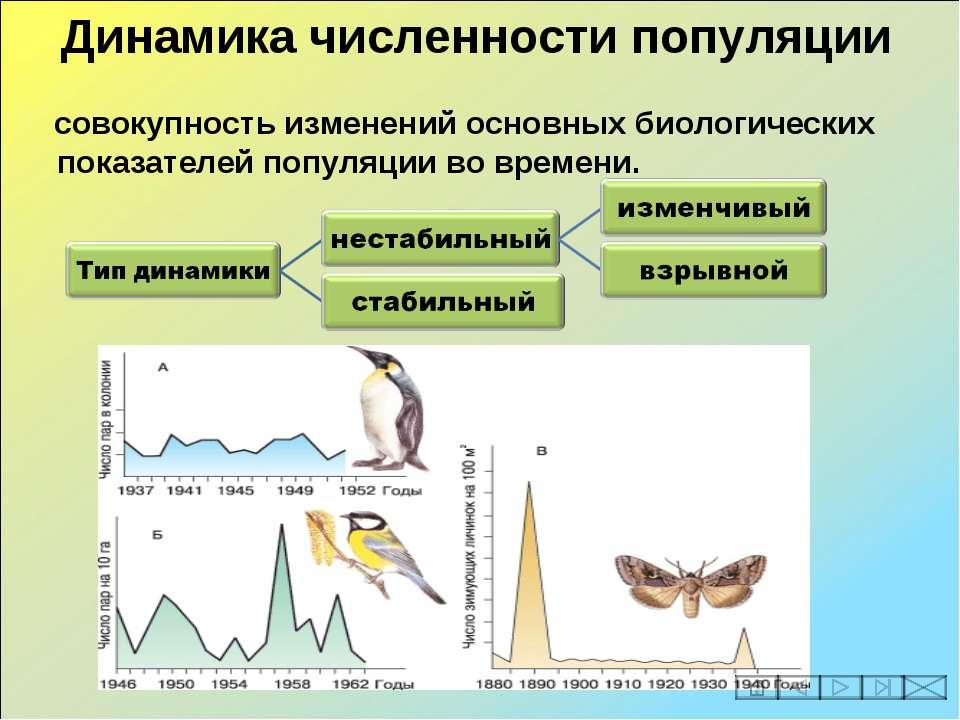 совокупность изменений основных биологических показателей популяции во времен...