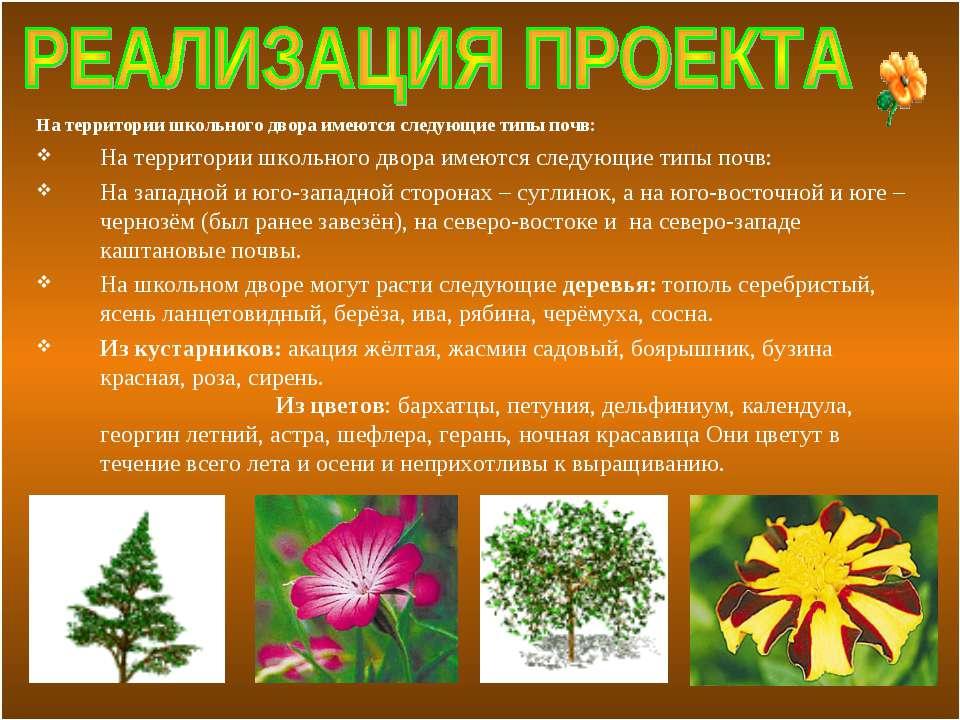 На территории школьного двора имеются следующие типы почв: На территории школ...