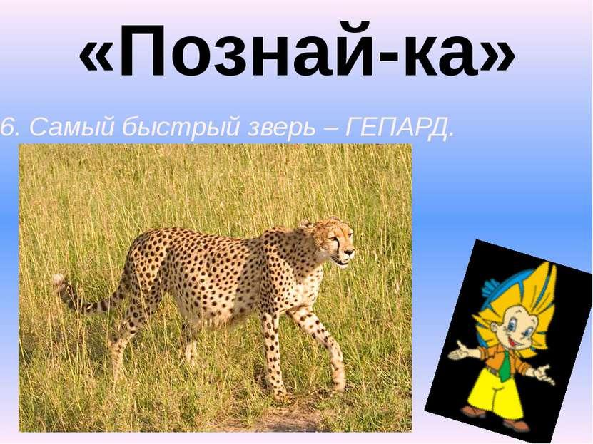 «Познай-ка» 6. Самый быстрый зверь – ГЕПАРД.
