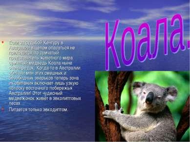 Если за судьбой Кенгуру в Австралии в целом опасаться не приходится, то сумча...