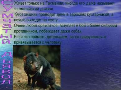 Живет только на Тасмании; иногда его даже называют тасманийский дьявол. Этот ...