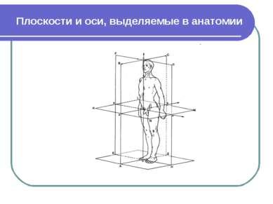 Плоскости и оси, выделяемые в анатомии