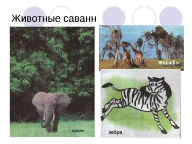 Животные саванн Жирафы зебра слон