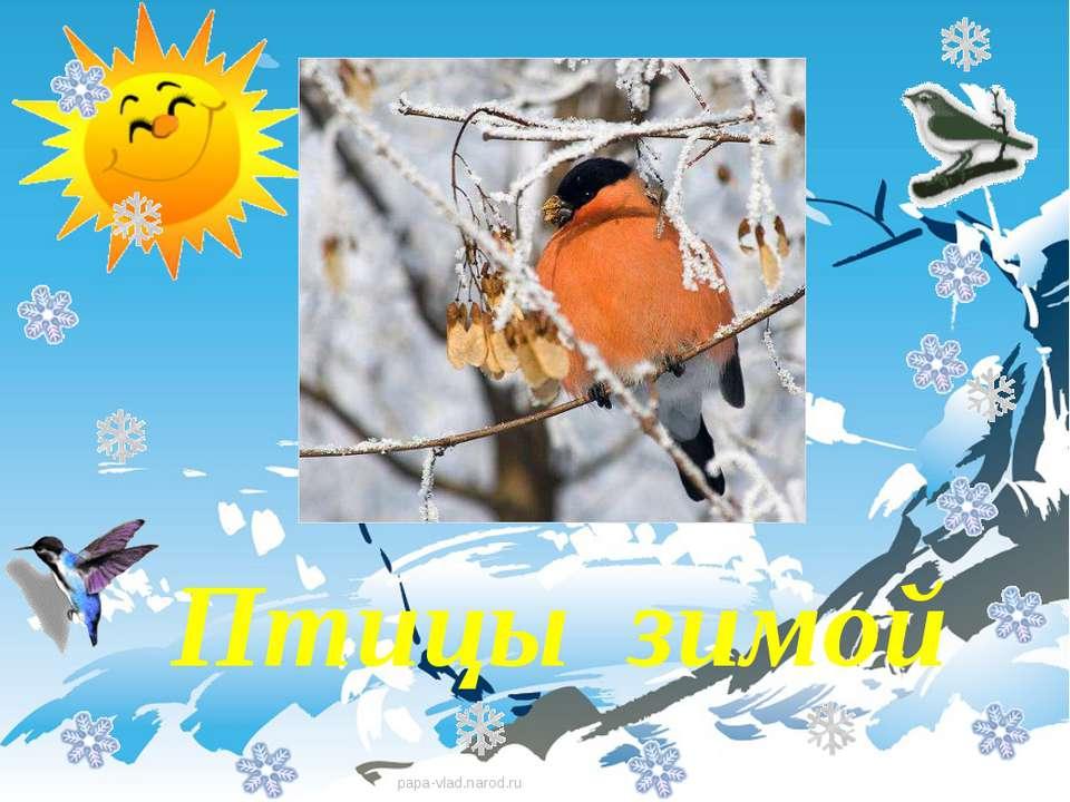 Птицы зимой Птицы зимой papa-vlad.narod.ru