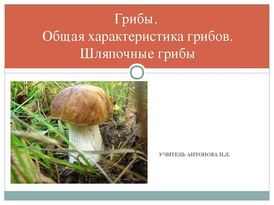 Грибы. Общая характеристика грибов. Шляпочные грибы УЧИТЕЛЬ АНТОНОВА Н.Л.