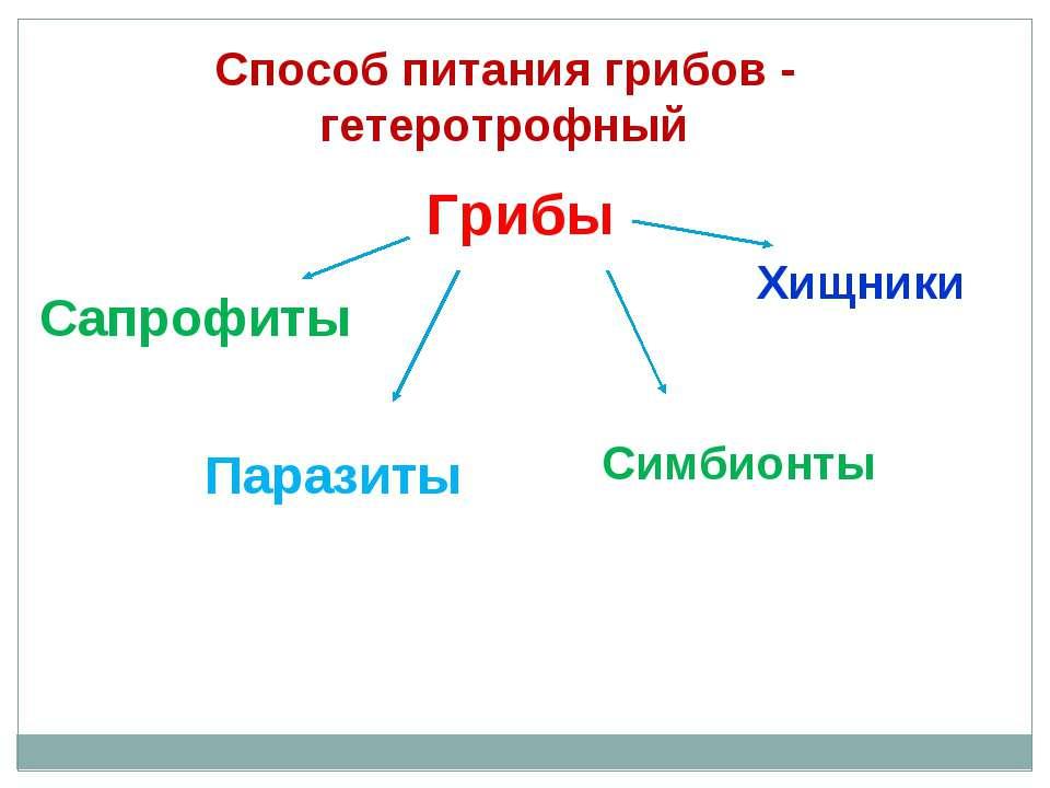 Способ питания грибов - гетеротрофный Грибы Сапрофиты Паразиты Симбионты Хищники