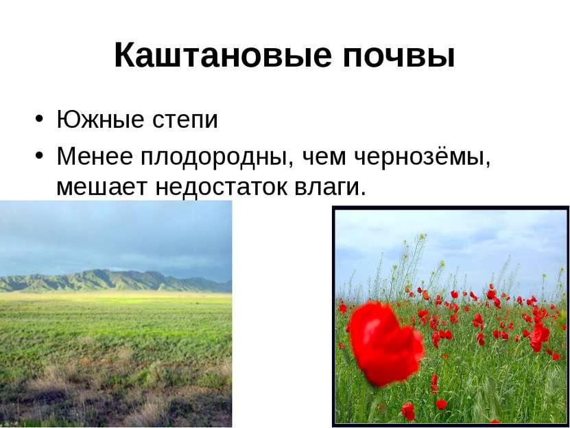 Каштановые почвы Южные степи Менее плодородны, чем чернозёмы, мешает недостат...